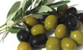 Settore olivicolo: fissato il prezzo delle olive per la nuova campagna