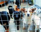 "Salemi: 46 cani randagi in rientro da ""Mister Dog"""