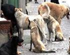 Prosegue la strage dei cani a Santa Ninfa