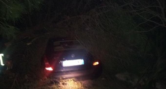 """Partanna: crolla albero su auto, il proprietario: """"disastro prevedibile"""""""