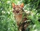 Poggioreale: gatta torna a casa dal padrone percorrendo 40 km