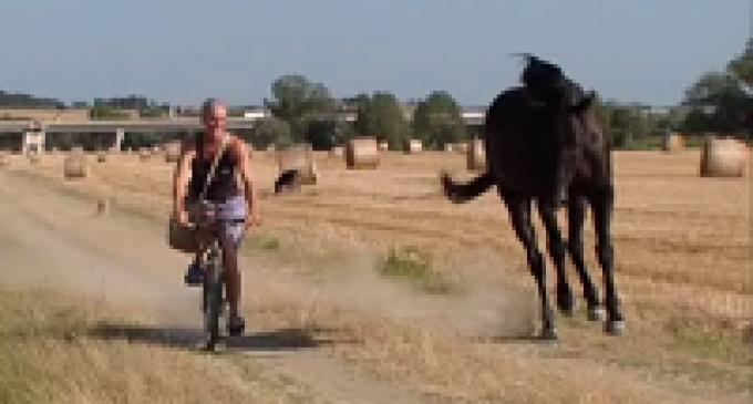 Poggioreale: grande successo al 1° raduno di bici e cavalli