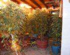 Mazara e Campobello: controlli serrati, Carabinieri sequestrano una piantagione di cannabis