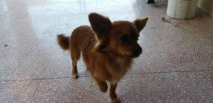 Partanna: appello per un cagnolino di piccola taglia