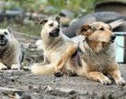 PARTANNA: multe per i cani senza chip. Si allarga il canile di contrada Raffa