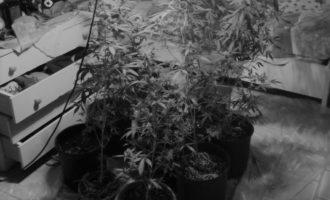 Mazara, una piantagione di Marijuana in camera da letto. In arresto una donna
