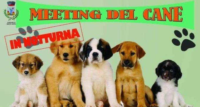 Santa Ninfa, meeting del cane: coppe, trofei e croccantini