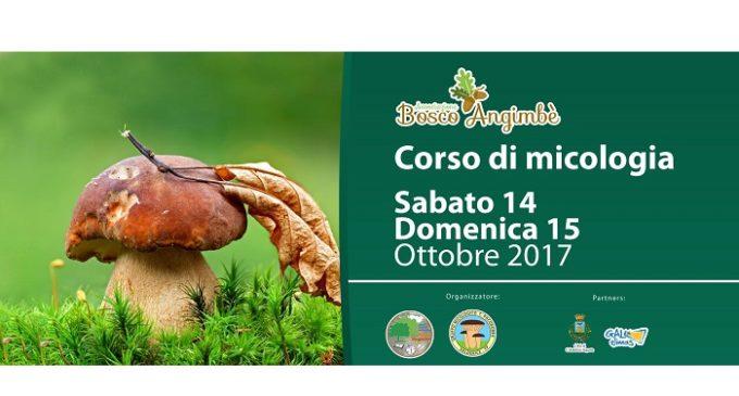 Calatafimi: corso per il rilascio dell'attestato della raccolta dei funghi epigei