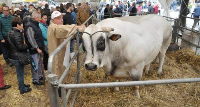 Partanna, ordinanza comunale: slitta la Fiera del bestiame