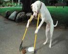 Palermo: vigili in borghese multano chi non raccoglie le feci del proprio cane