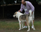 61° internazionale canina: exploit dei Partannesi
