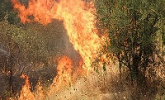 Alcamo: grave incendio sul Monte Bonifato