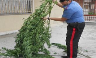 Marsala: sequestrati 20 kg di marijuana