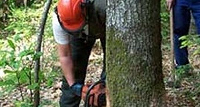 I sindacati protestano a tutela dei lavoratori forestali
