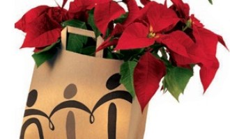 Partanna: Stelle di Natale AIL in piazza Falcone e Borsellino