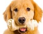 Castelvetrano: iniziativa comunale per le adozioni canine