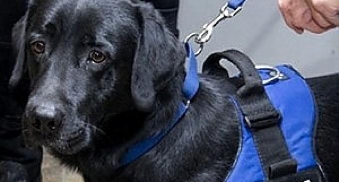 Alcamo: cane poliziotto trova pericolosa arma, due arresti