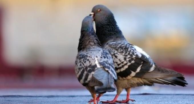 Spara a due colombi uccidendoli, arrestato