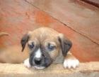 """Castelvetrano: continua la """"strage dei cani"""""""