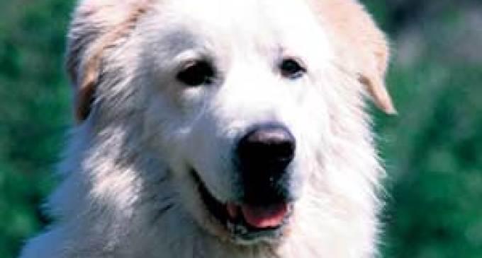 Anziano colto da malore viene salvato dal cane del vicino