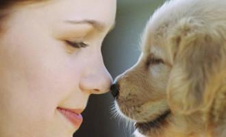 Un sorriso per la zampa: l'arte della fotografia incontra l'amore per il cane