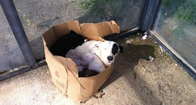 Partanna: un cittadino segnala il ritrovamento di una cucciolata