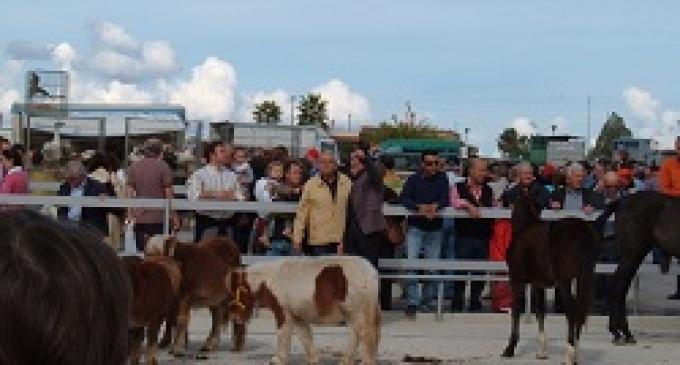 Domenica ci sarà la Fiera del Bestiame, chiusa la sezione relativa la vendita di animali