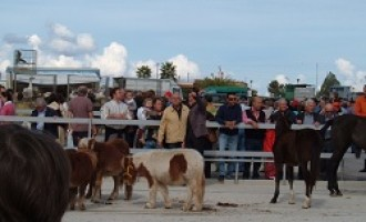 Partanna-ordinanza del Sindaco Cuttone: sospesa la Fiera del Bestiame nei mesi di marzo e aprile