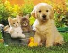 Cani e gatti, tumori in aumento