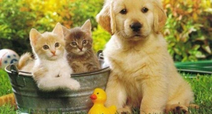 Cani e gatti sotto controllo del fisco