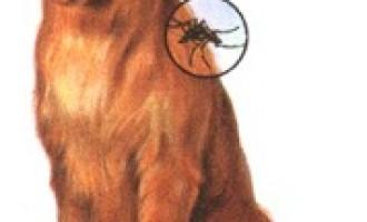 Marsala: controlli al canile per prevenire la leishmaniosi