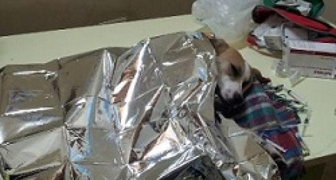 Partanna: cane avvelenato salvo grazie al pronto intervento dell'Associazione A.N.P.A.N.A