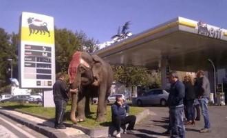 """Trovato elefante """"in fila"""" dal benzinaio"""