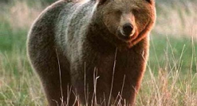 """Romeno inseguito da un orso, """"salvo"""""""