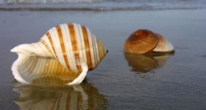 "Menfi: oltre 800 conchiglie marine e terrestri in mostra per ""Stupor Maris"""
