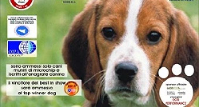 """Menfi: mostra cinofila amatoriale """"L'uomo e il cane"""""""
