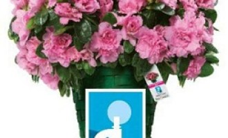 Festa della Mamma: in piazza con l'Azalea della Ricerca