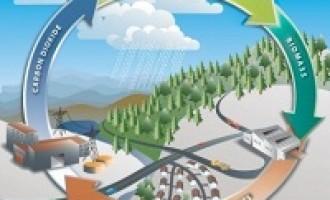 Castelvetrano: intesa con la Green Oil Energy per la realizzazione di un impianto di produzione di energie da biomasse vegetali