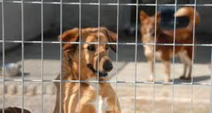 Castelvetrano: parte oggi una campagna di accalappiamento dei cani randagi