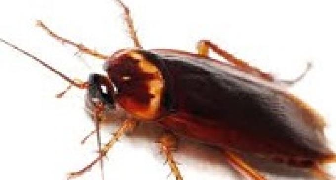 Trapani: parte l'opera di disinfestazione dagli scarafaggi
