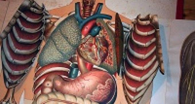 Castelvetrano: le nuove Carte d'Identità riporteranno le disponibilità alla donazione degli organi