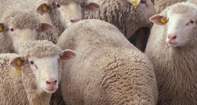Partanna- Fiera del Bestiame: vietato l'ingresso ad Ovini, Bovini e Caprini per il giorno 10 Novembre