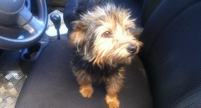 Partanna: ritrovato stamattina cagnolino smarrito