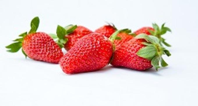 La Sicilia paradiso per le fragole, più della metà prodotta nel marsalese