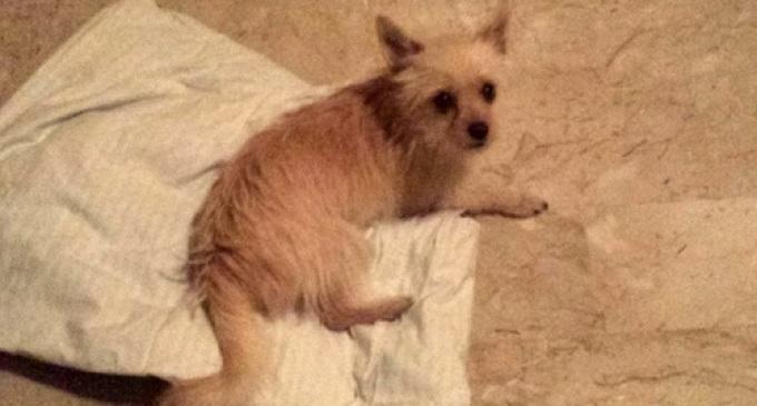 Partanna: trovato il proprietario del cane smarrito