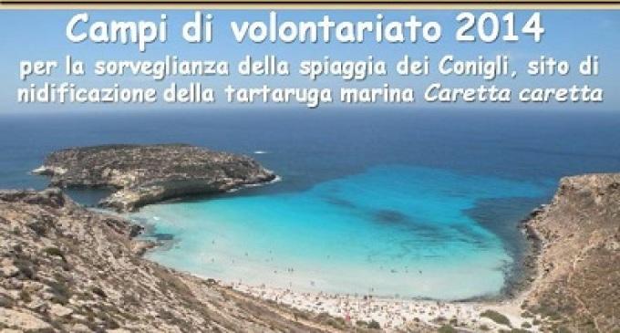 Lampedusa: campi di volontariato nella spiaggia dei Conigli