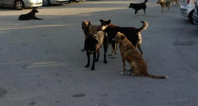 Partanna: nostra concittadina segnala il problema di zecche rilasciate da cani randagi