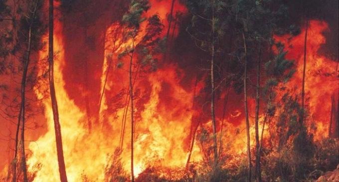 Lavoratori forestali presidiano gratuitamente i boschi del trapanese