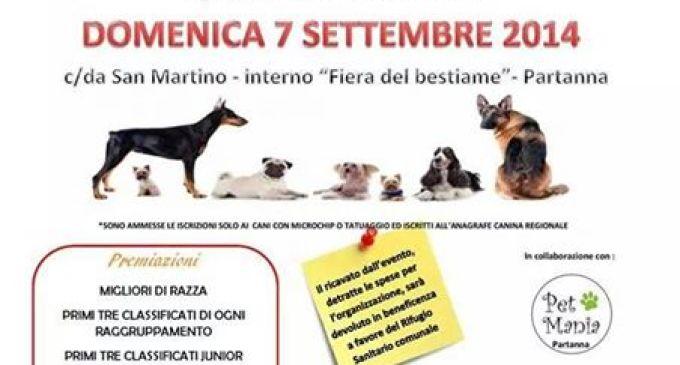 """Partanna: domenica 7 settembre 1° edizione """"Collare d'Oro"""""""