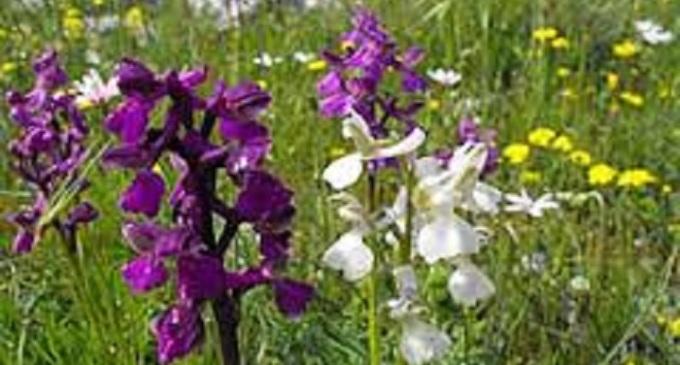 Allo Zingaro il sentiero delle orchidee